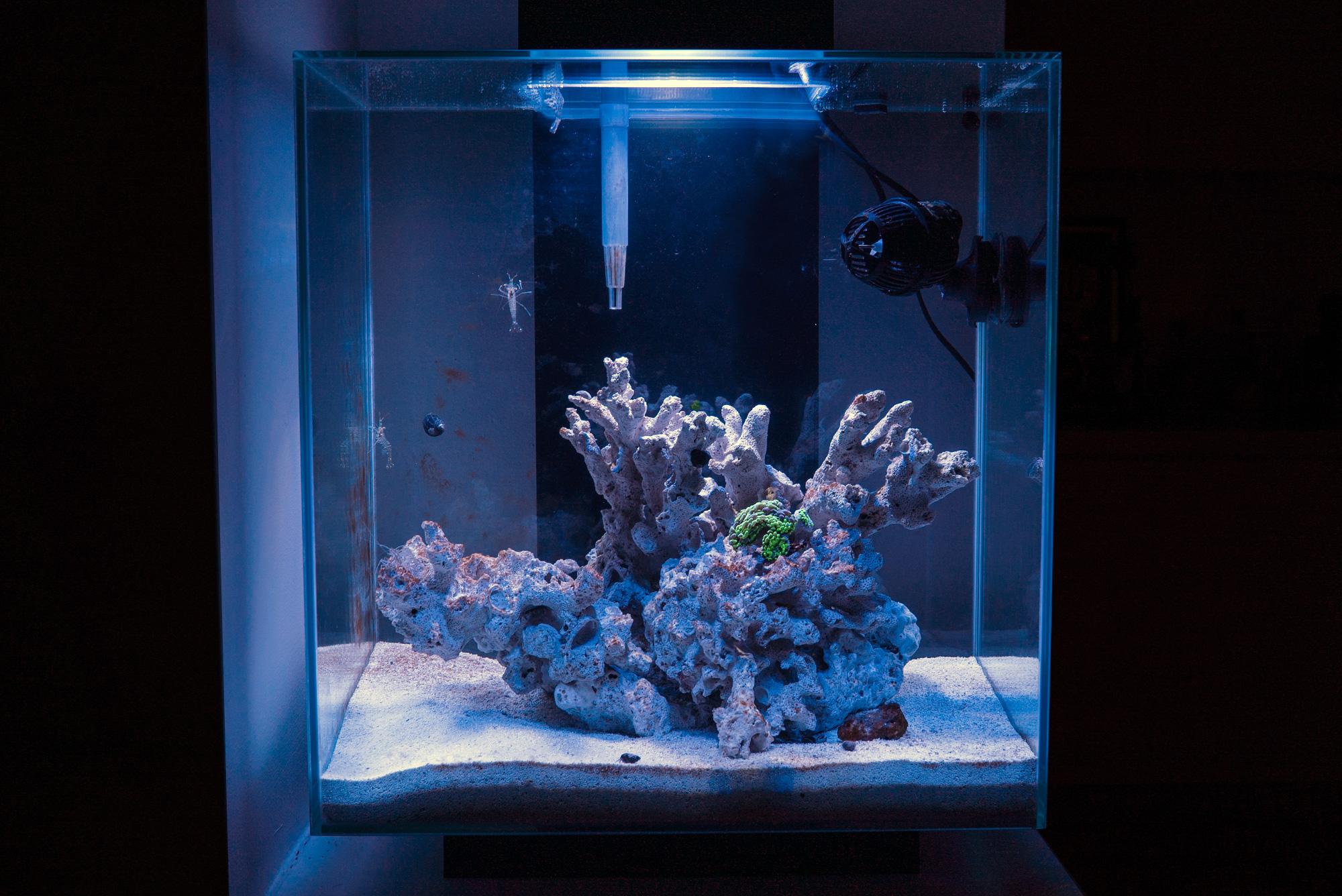 Algae Zero Edge Aquarium Plumbing