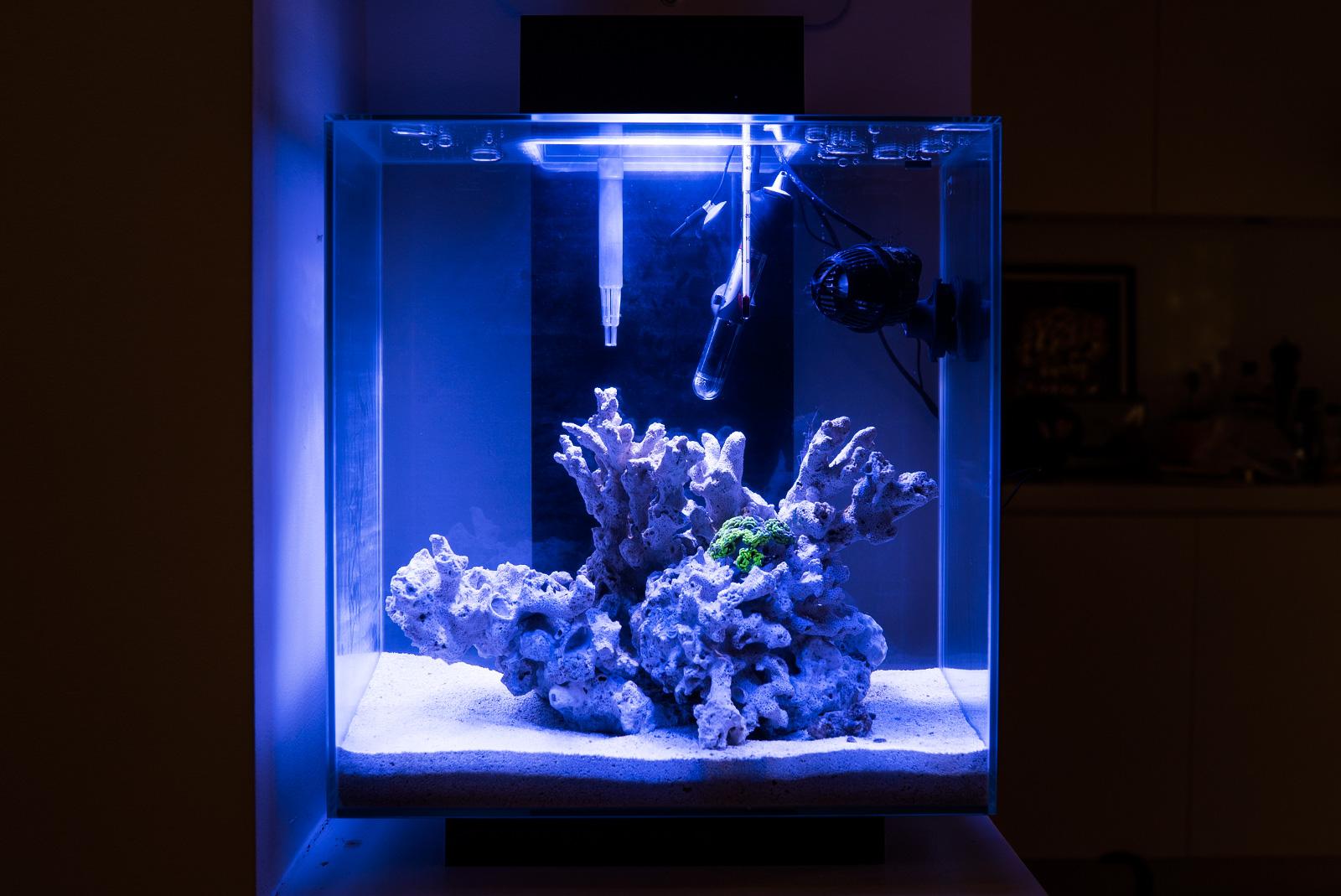 nano reef fluval edge 2 ultrabrite led justin fox. Black Bedroom Furniture Sets. Home Design Ideas