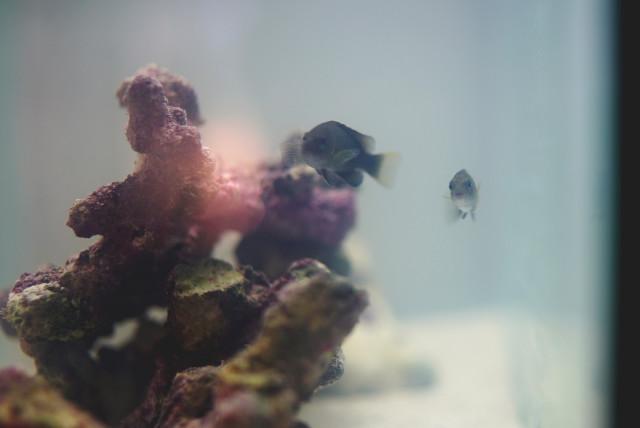 rockpoolfish