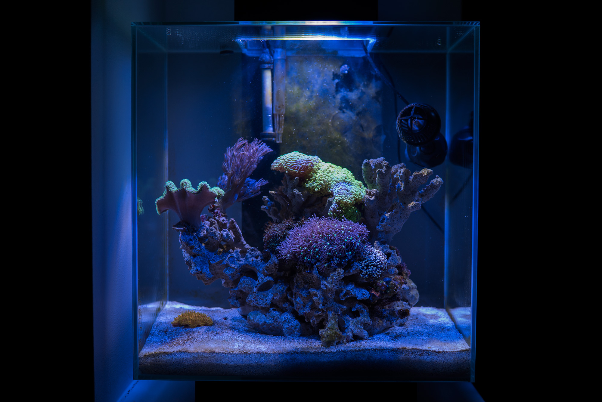 justin fox 39 s fluval edge 2 new video page 15 page 5 members aquariums nano forums. Black Bedroom Furniture Sets. Home Design Ideas