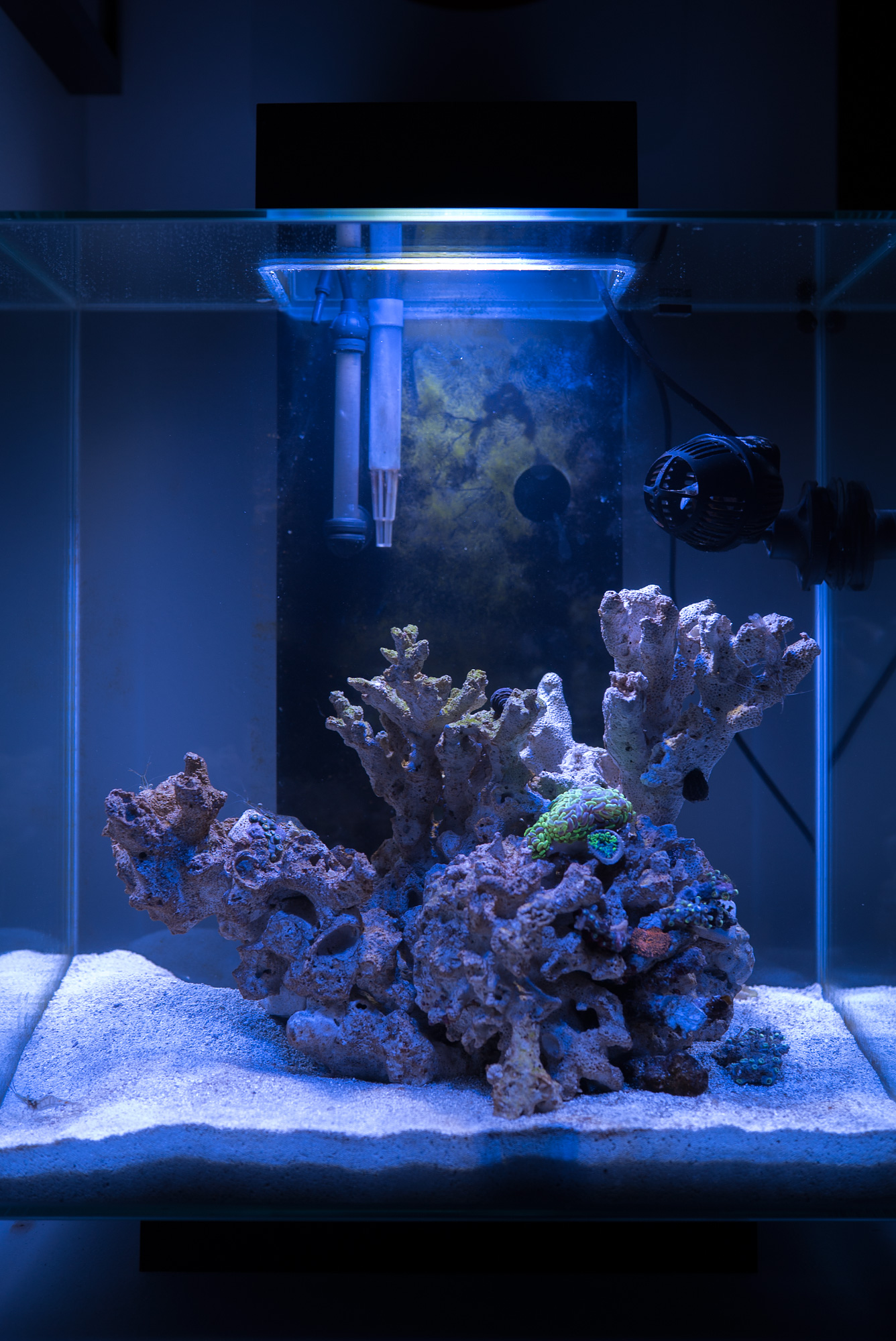 nano reef fluval edge 2 fragalicious justin fox. Black Bedroom Furniture Sets. Home Design Ideas