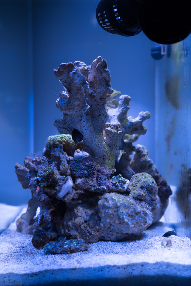 fluval_edge_2_side_7_july_2015