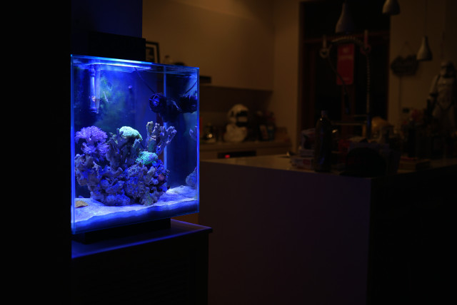 kitchen_fluval_edge_2_reef_nano_justinfox