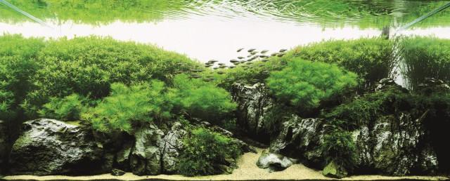 NaturalAquariumFish_RTKAquarium5