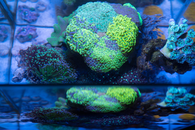 fts_august_2015