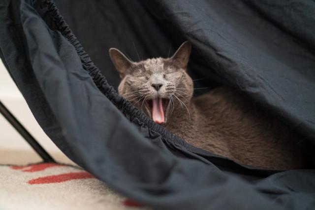 mia_yawn