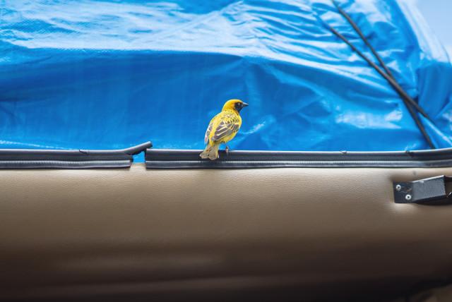 birdincar1