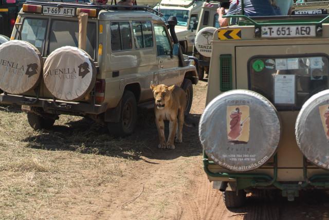 lion_cars